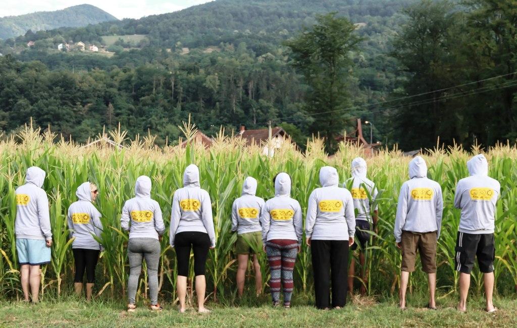 GMO sta je to kukuruz
